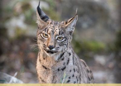 texas-predator-hunts-event