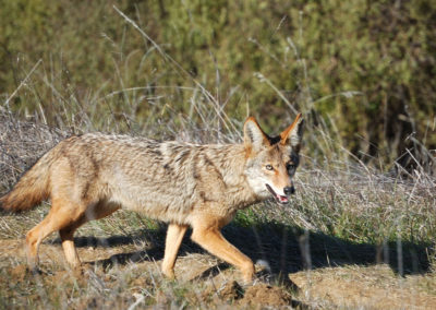 texas predator hunts 2020