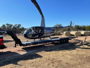 Texas helicopter pig and sheep hunting
